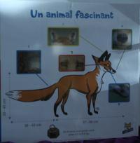 Expo : J'aime les renards | Wakou